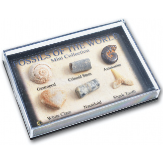 Mini Fossil Box