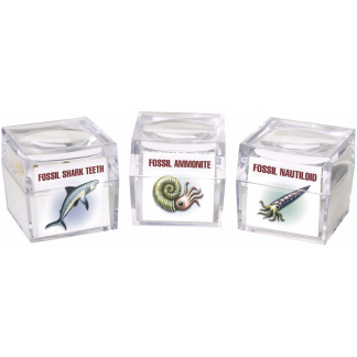 Magnifier fossil boxes