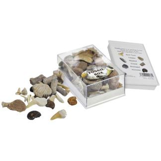 Fossil Box