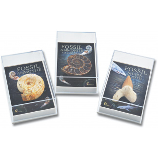 Gift Boxed fossils