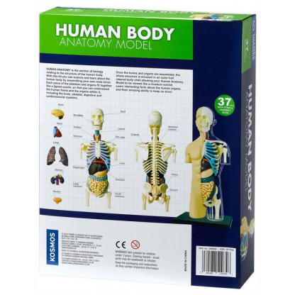 Human Anatomy Model back of box