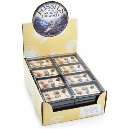 Mini Fossil Box display