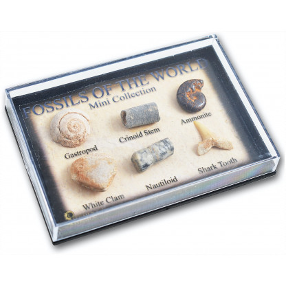 Mini Fossil Box