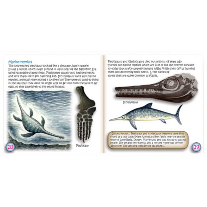 Sneak peak study of fossils booklet