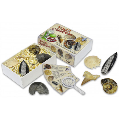 Fossil Collection Gift Box