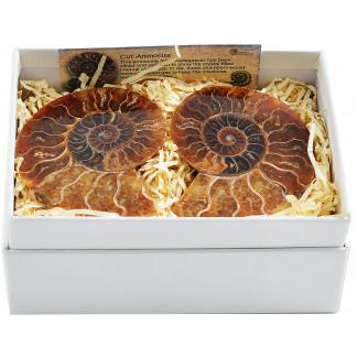 Boxed ammonite pair