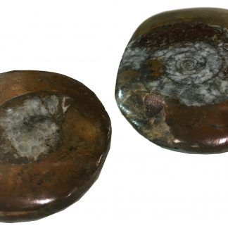 Goniatite buttons
