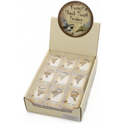 3082 1 Real shark tooth fossils set in a pendant.