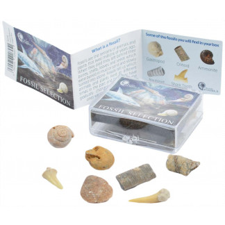 Fossil selection box