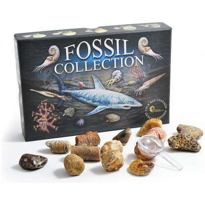 Fossil Collection box with fossils