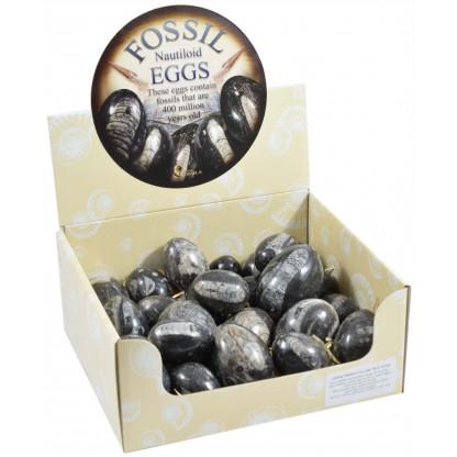 Nautiloid Eggs display box