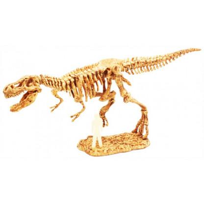 T-rex skeleton assembled