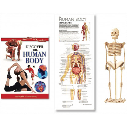 5703 2 Tin set includes illustrated book, wall chart and model skeleton kit.