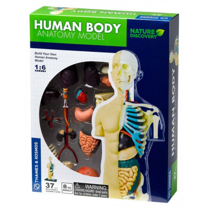 "260830 <p class=""p1"">Human Body Anatomy Model Kit has skeleton and organs that fit together like a jigsaw puzzle, so that you can understand the human frame and the organs within it.</p>"