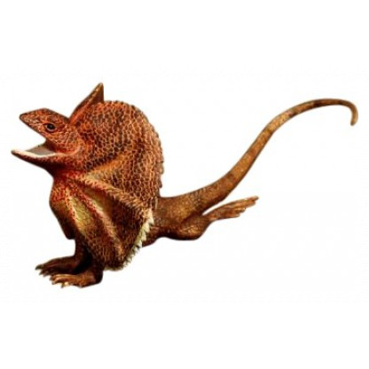 78001 4 Plastic replica of a frilled lizard, measuring 18 cm long model and including an information hang tag.