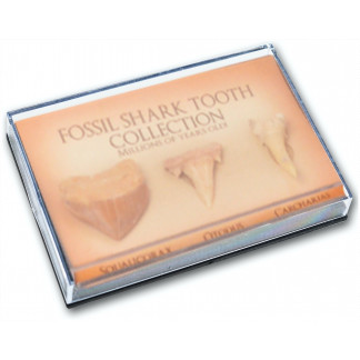 Fossil shark tooth collection box