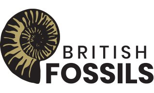 bf logo gold2