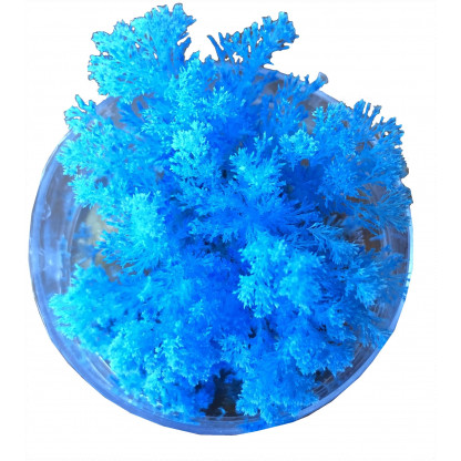 4998 3 Grow a realistic looking coral structure using the special crystal method provided in this kit.