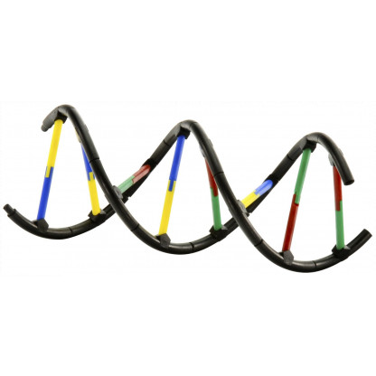 665002 geneticsdna model scaled 1 Learn about the biology of reproduction, the components of cells, and how chromosomes are combined and copied. Assemble a model to see the elegant double-stranded helical structure of DNA.