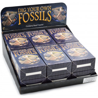 Dig Your Own Fossils