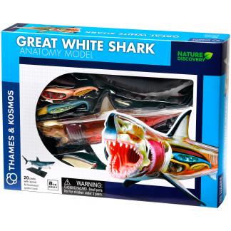 Great White Shark anatomy model box